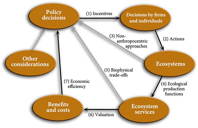 Environmental Science Natural Resource Management