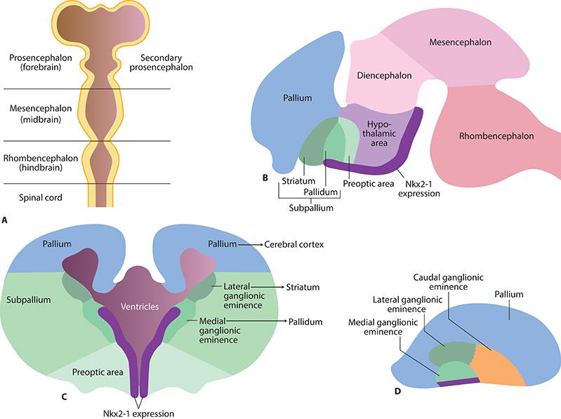 tapering lexapro while increasing prozac