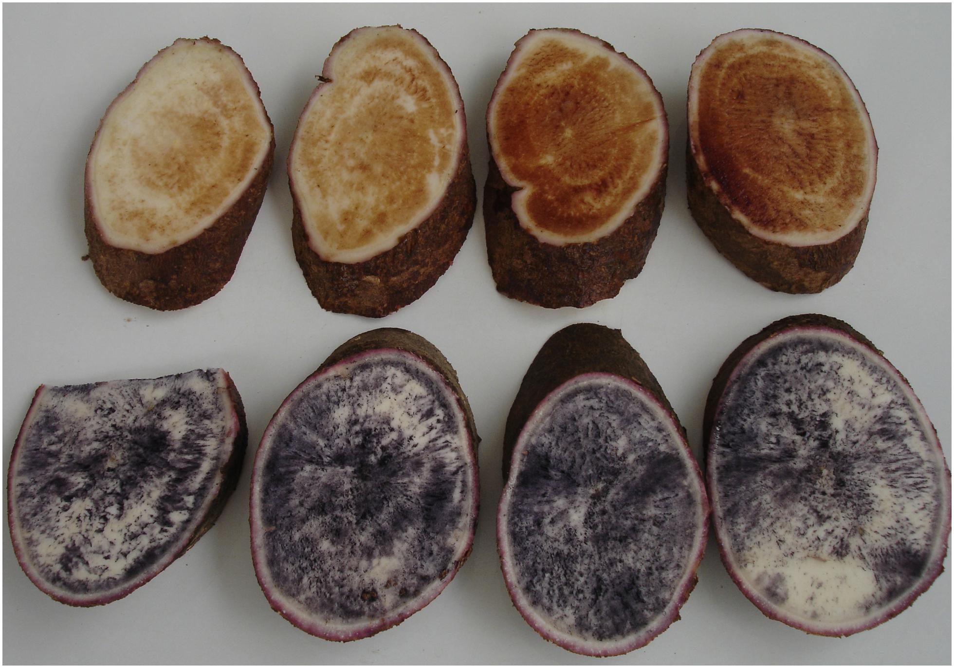 Frontiers | Biological Implications in Cassava for the
