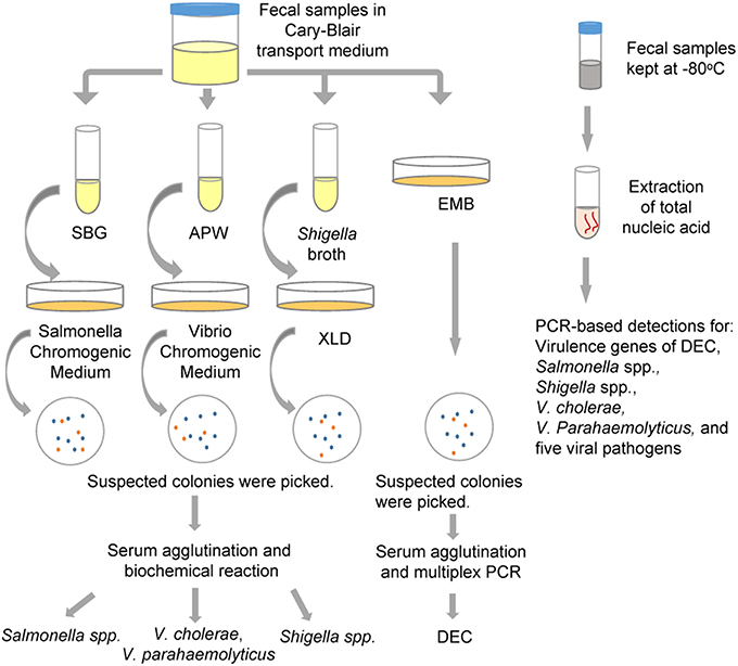 Frontiers Evaluation Of Pcr Based Assays For The