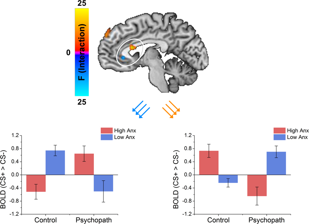 Frontiers Psychopaths Show Enhanced Amygdala Activation During