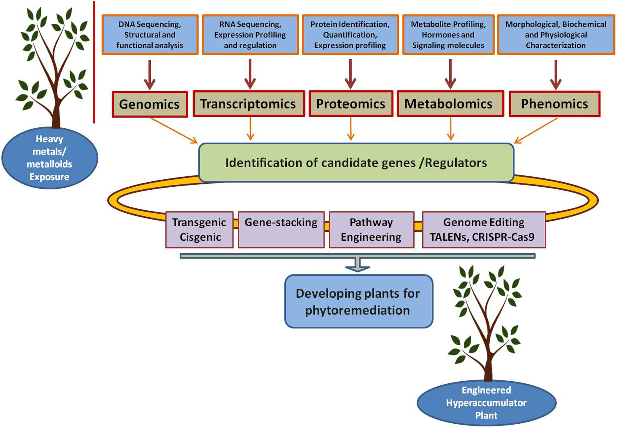 Frontiers | Potential Biotechnological Strategies for the