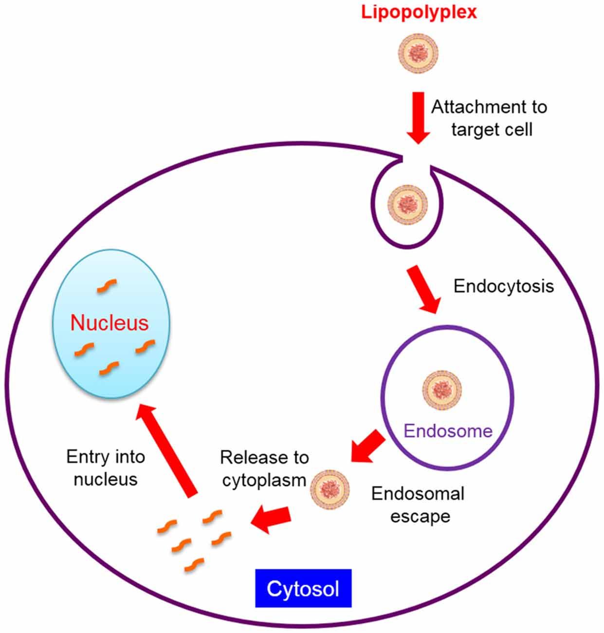 L Lysine Cancer Treatment