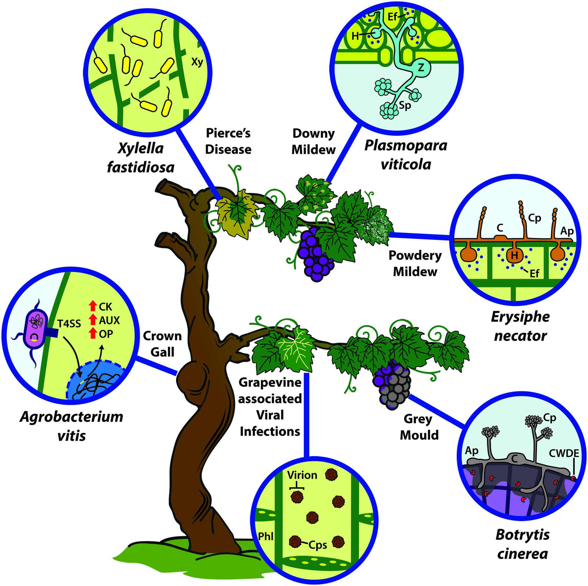 a study on bacteria classification and life cycle Plant classification review plant classification easy q&a study guide on plant classification which of them is the human life cycle.