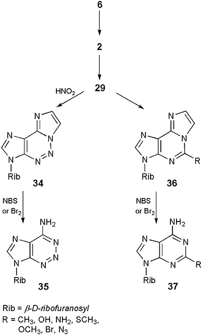 Frontiers | Base-Modified Nucleosides: Etheno Derivatives