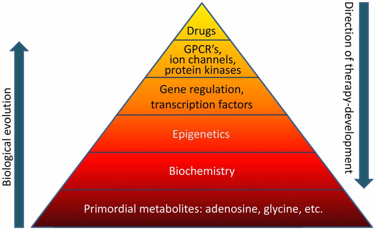 articles on biochemistry aflatoxins in natural peanuts arachis  frontiers the biochemistry and epigenetics of epilepsy focus on frontiersin org