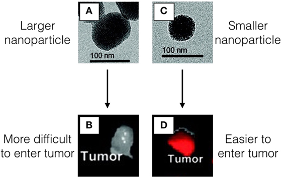 Figure 1 - Images A,C. show the nanoparticles using a special microscope called a transmission electron microscope (TEM) that allows us to see very tiny objects.