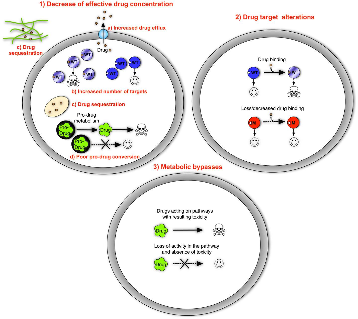 mechanisms of cancer drug resistance pdf