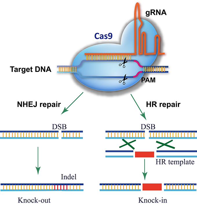 Recent Advances In Phosphorylation Of Food Proteins A Review