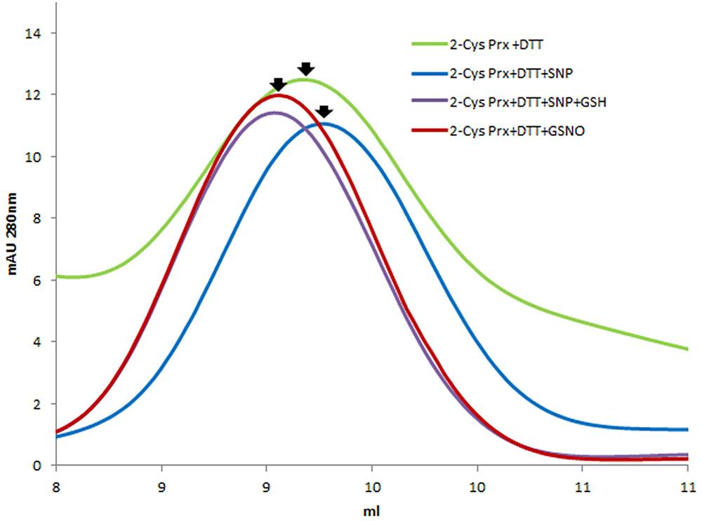 Frontiers   Glutathionylation of Pea Chloroplast 2-Cys Prx
