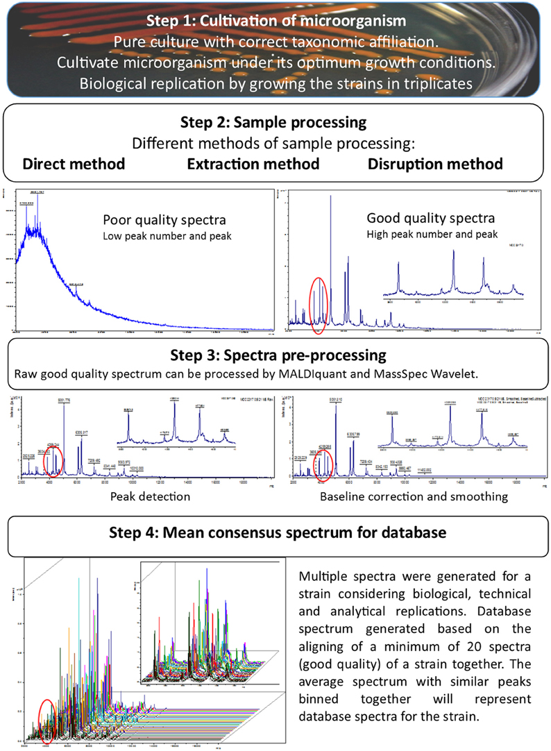 Frontiers | Matrix-Assisted Laser Desorption/Ionization Time
