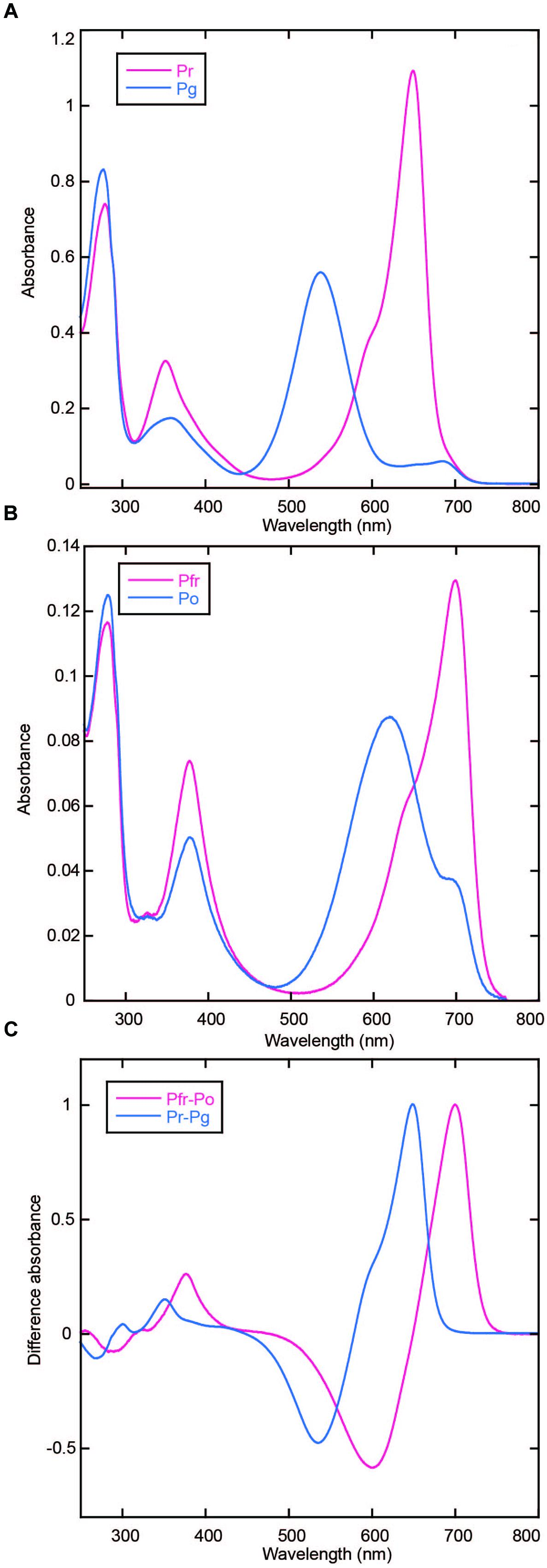 Frontiers | Photoconversion and Fluorescence Properties of a