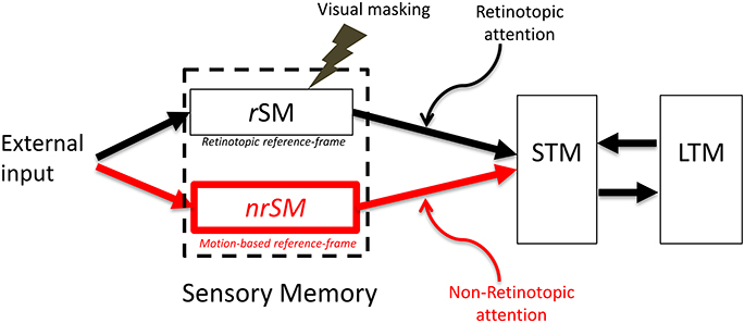 There are Different Types of Memory - Fact or Myth? |Sensory Memory Examples Psychology