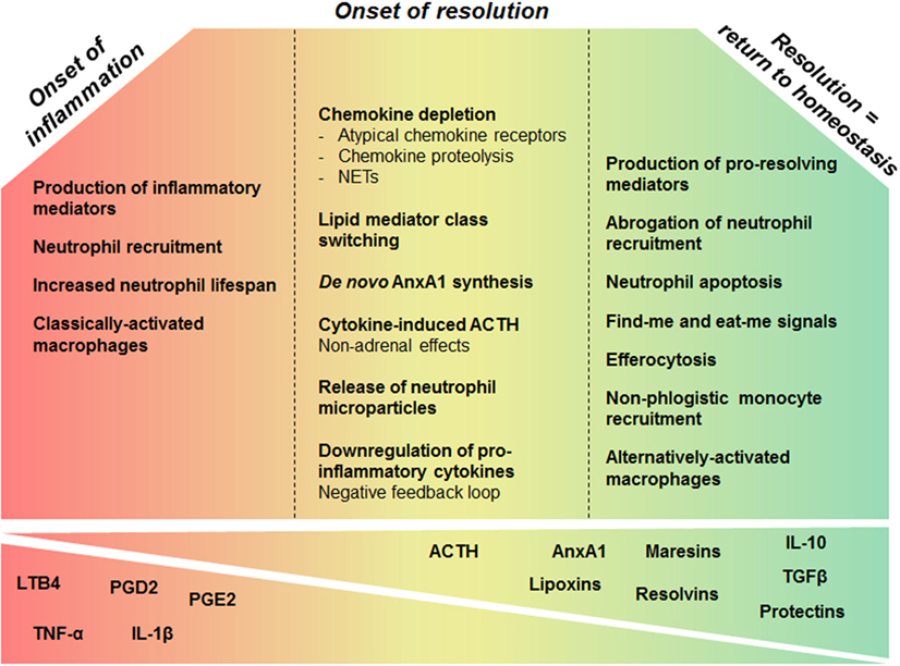 Frontiers | Resolution of Inflammation: What Controls Its