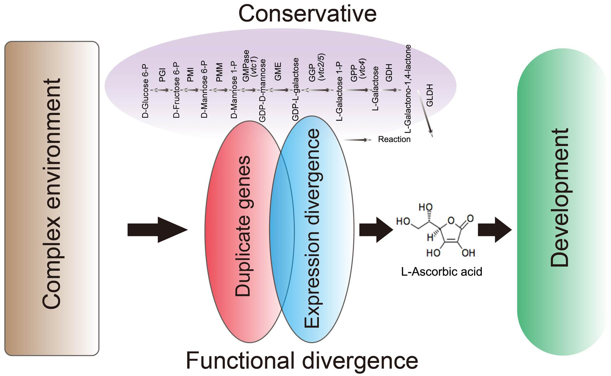 Frontiers | Conservation and Expression Patterns Divergence
