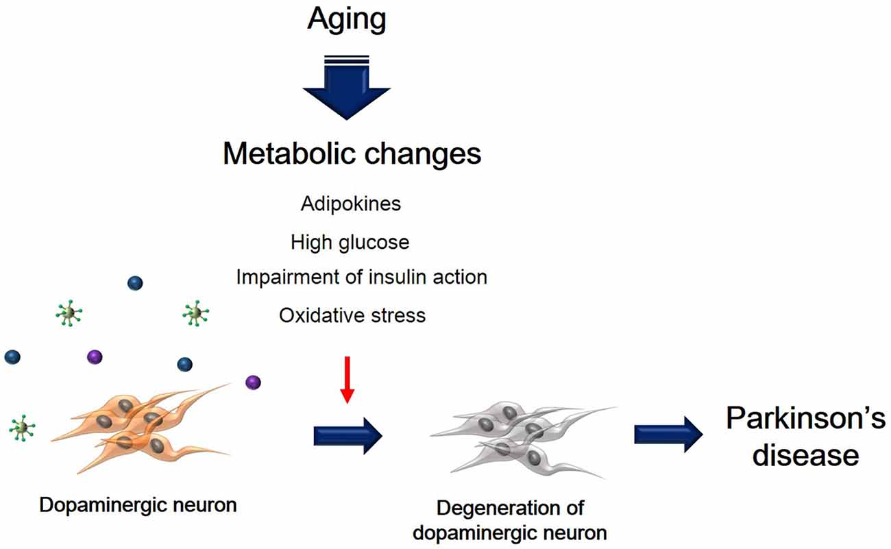 Frontiers | Degeneration of Dopaminergic Neurons Due to