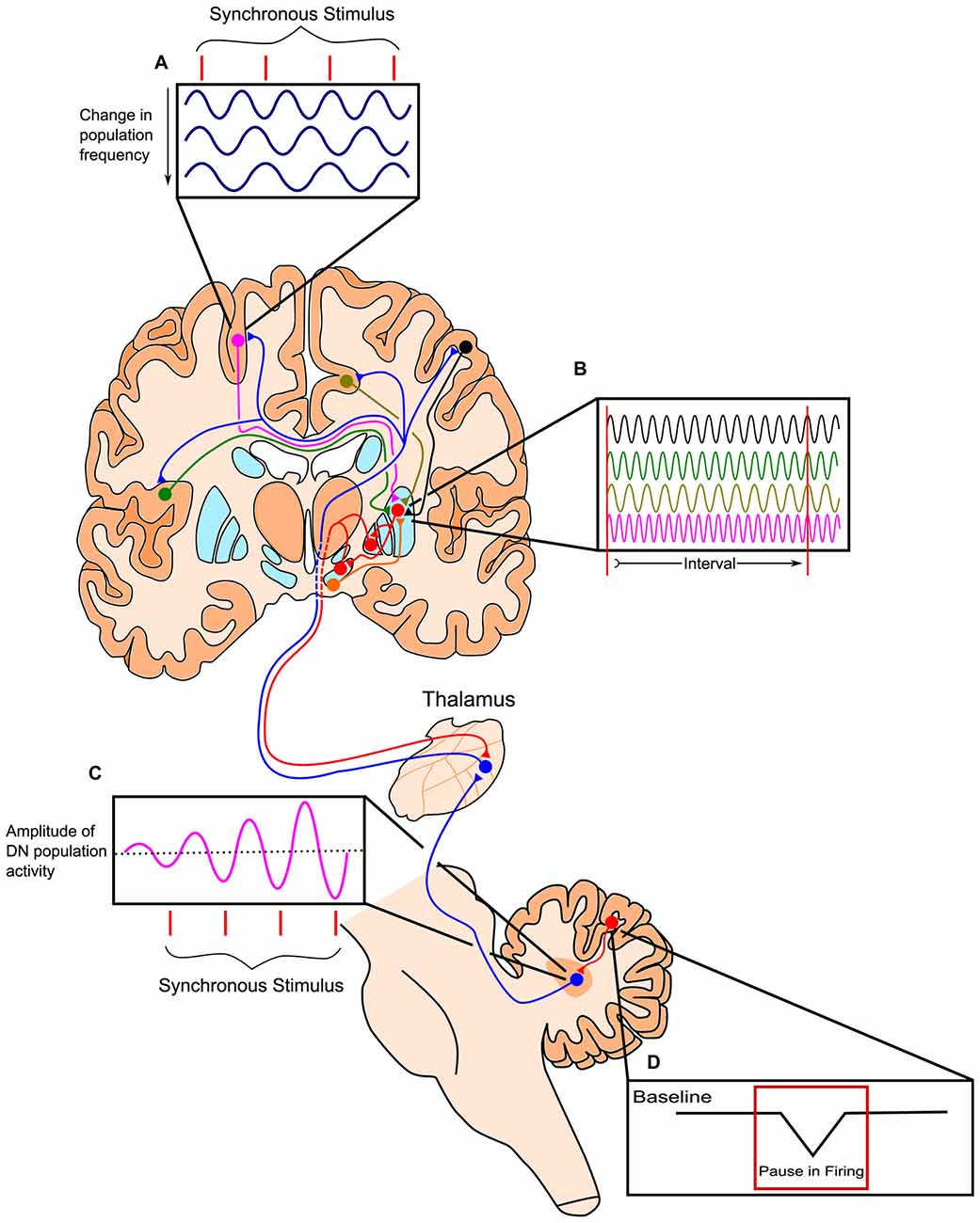 Frontiers Cognitive Aging And Time Perception Roles Of Bayesian Ingersoll Rand Transporter Wiring Diagram Free Download