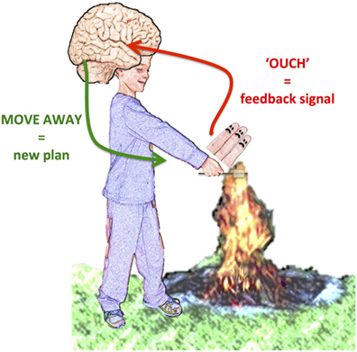 Figure 1 - Example of feedback signal.