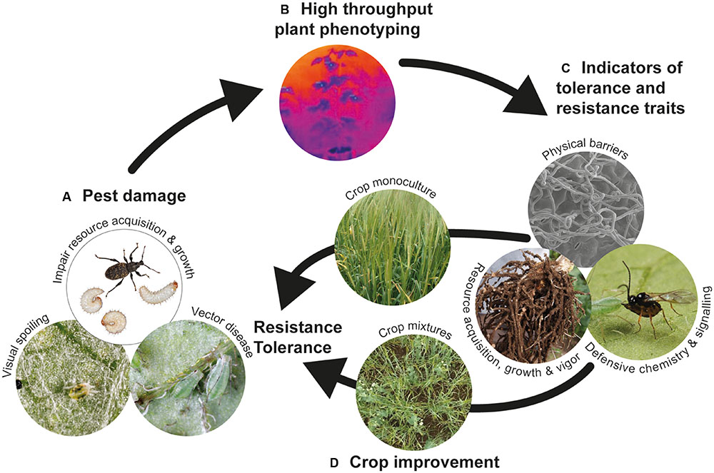Frontiers | Plant Defense against Herbivorous Pests: Exploiting