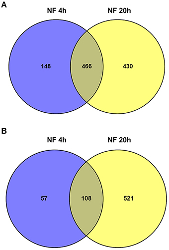 Frontiers | Nod Factor Effects on Root Hair-Specific Transcriptome