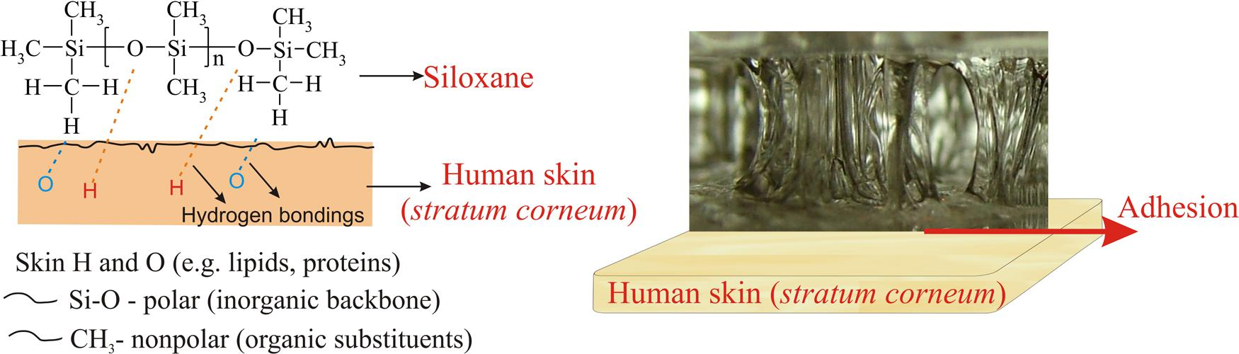 Frontiers | Direct Human Contact with Siloxanes (Silicones