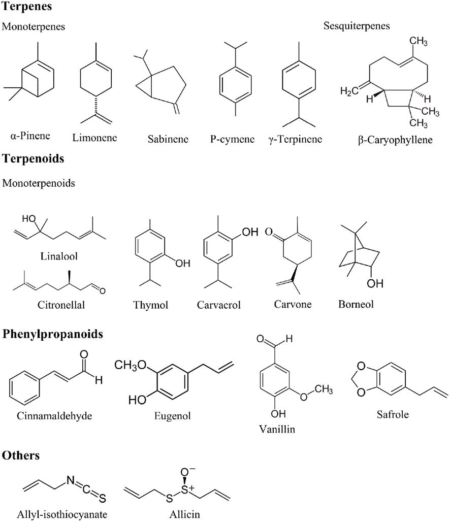 synthesis of oils phospholipids and steroids organelle