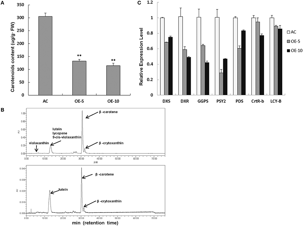 Frontiers Overexpression Of Slrbz Results In Chlorosis And