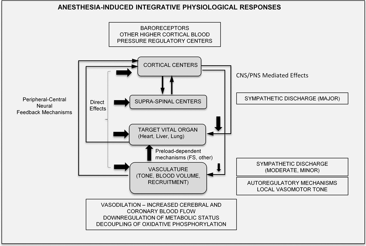 Frontiers Molecular And Integrative Physiological Effects Of Iso Mass Extreme Effect