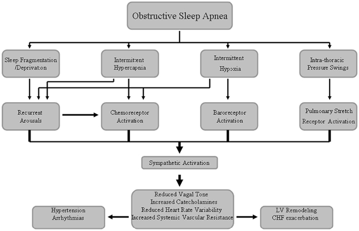 Frontiers Sympathetic And Catecholaminergic Alterations In Sleep