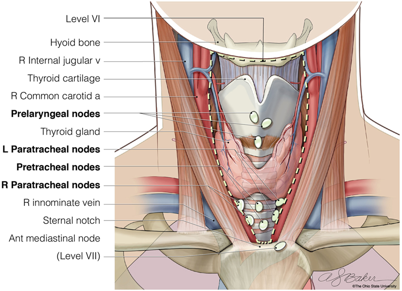 Frontiers The Role Of Central Neck Lymph Node Dissection In The