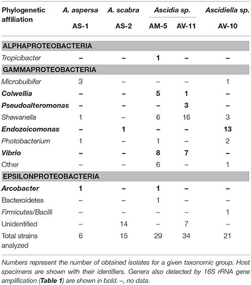 Frontiers | Endozoicomonas Are Specific, Facultative Symbionts of