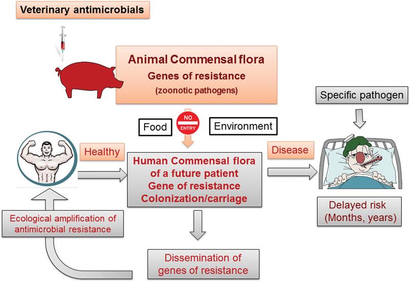 Frontiers | Veterinary Medicine Needs New Green