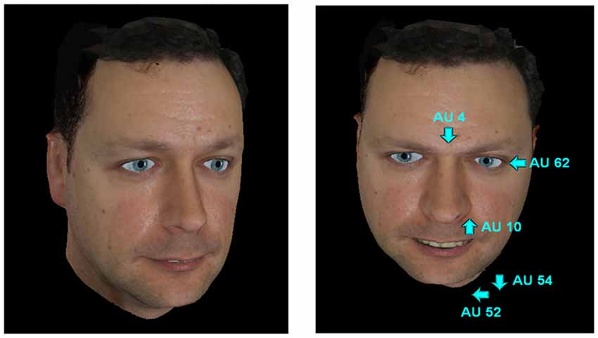 Maximally discriminative facial