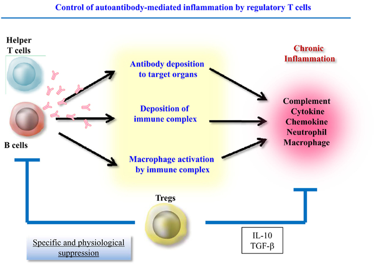 treg cells in inflammation experiment They reported that inflammation-induced treg cells reversed  for example, in  experimental models of chronic inflammatory disorders,.
