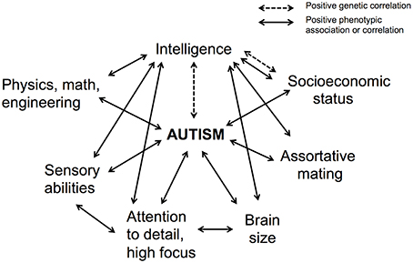 For Autistic Kids Iq May Not Predict >> Frontiers Autism As A Disorder Of High Intelligence Neuroscience
