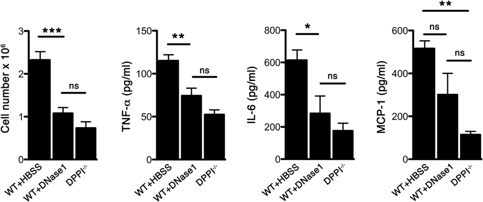 Frontiers | Neutrophil Extracellular Traps Enhance Early