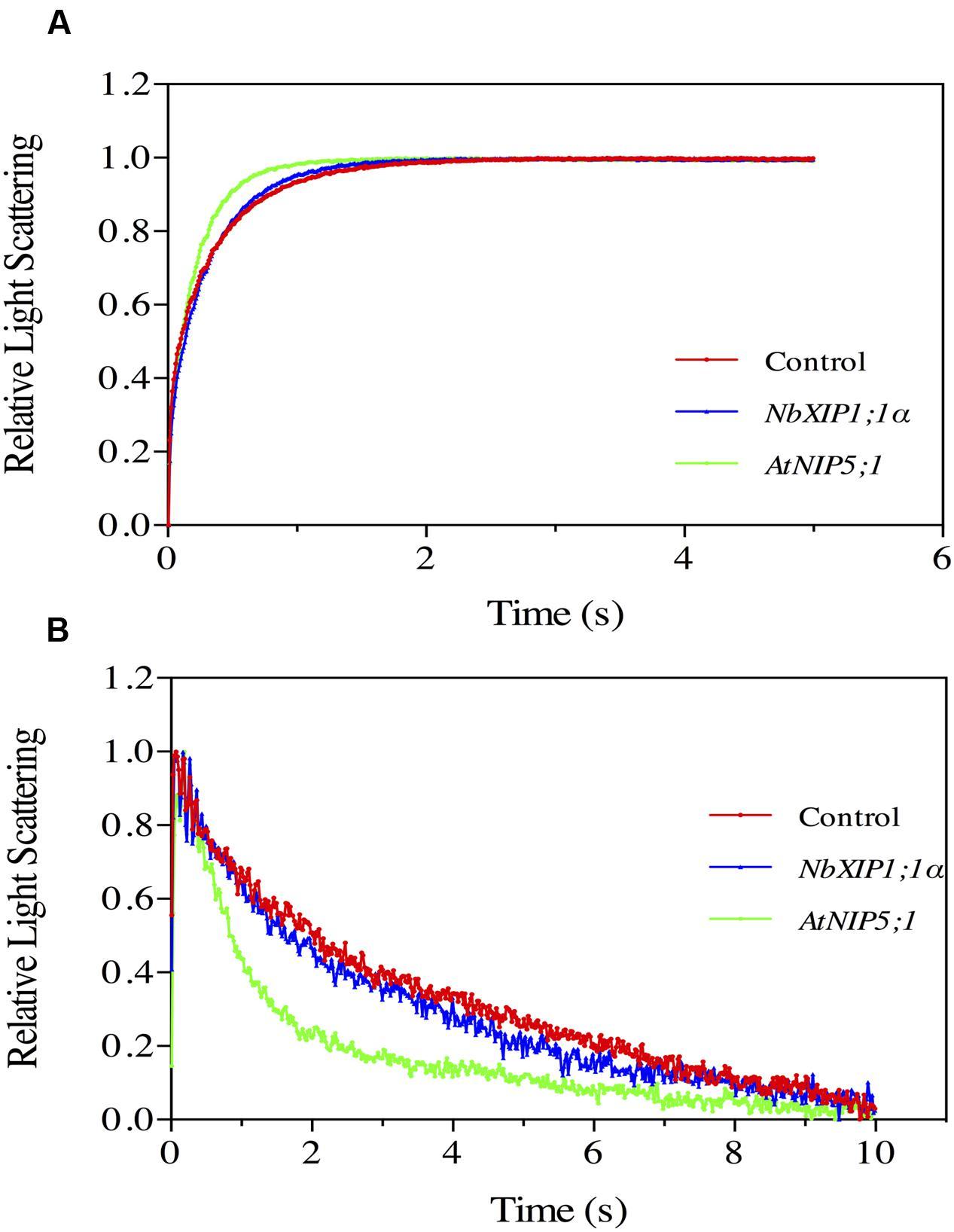 Frontiers | The Aquaporin Splice Variant NbXIP1