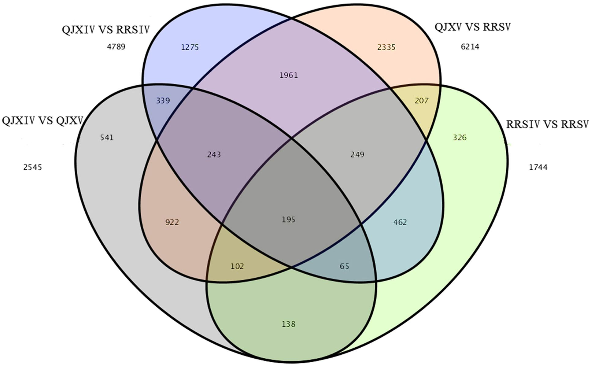 Frontiers | Transcriptome Analysis and Ultrastructure ...