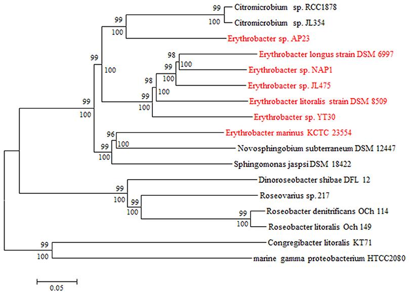 Image Result For Horizontal Gene Transfera