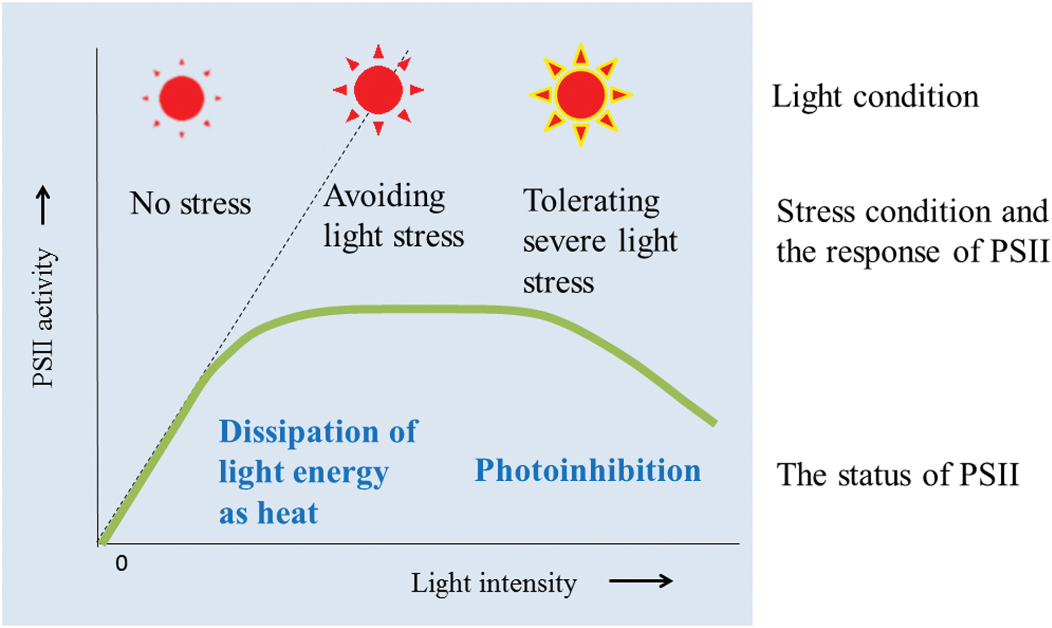 effects of light intensity on the
