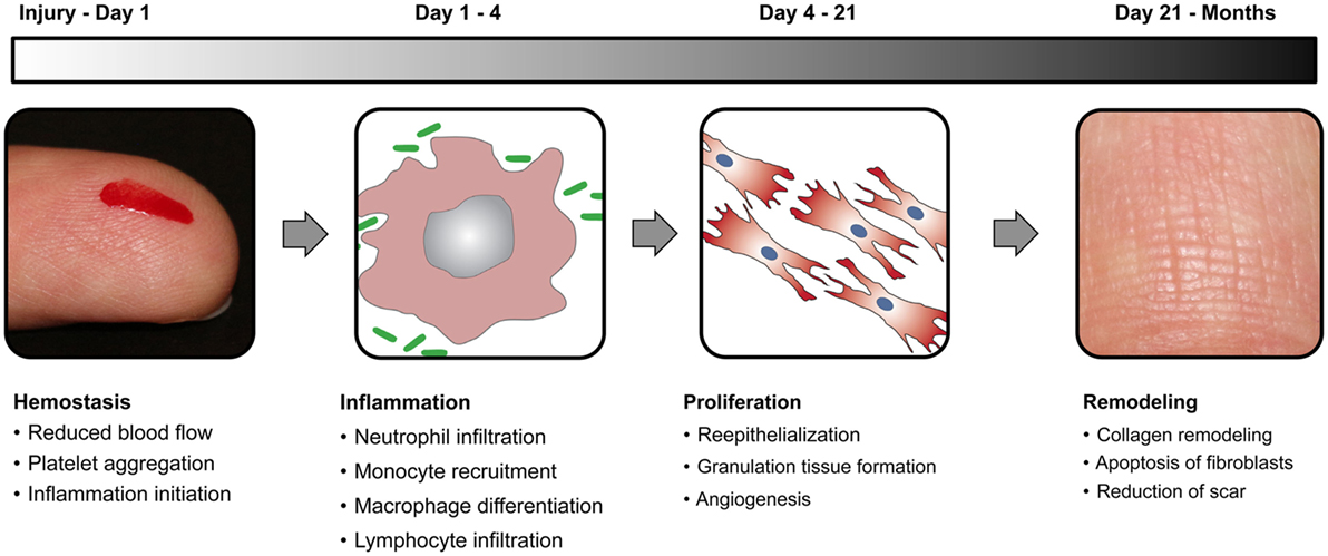 Frontiers | Biomaterials and Nanotherapeutics for Enhancing