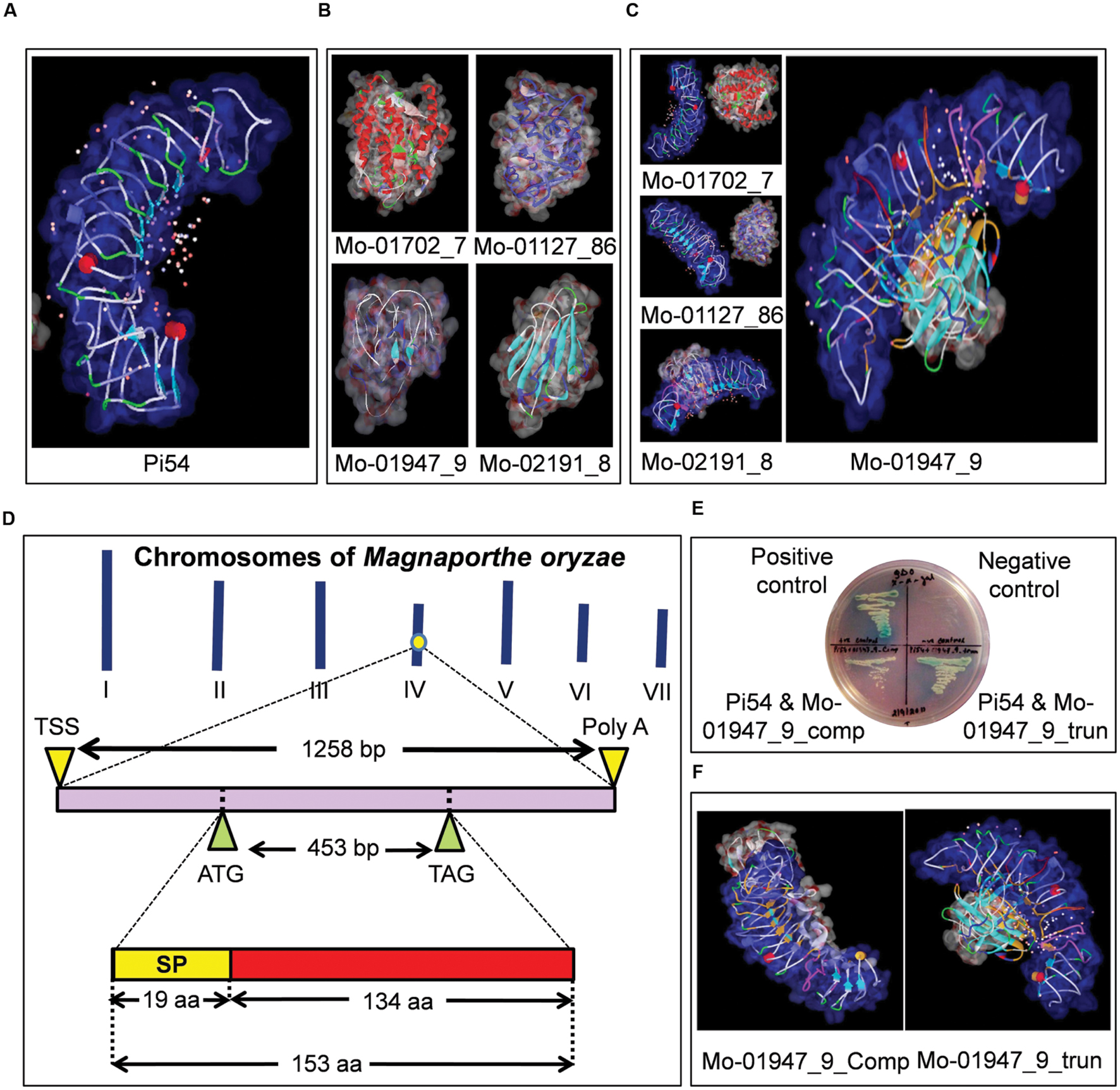 Frontiers   Analysis of Magnaporthe oryzae Genome Reveals a Fungal