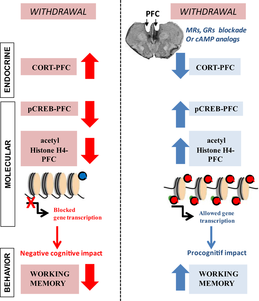 Frontiers   Behavioral Neuroadaptation to Alcohol: From
