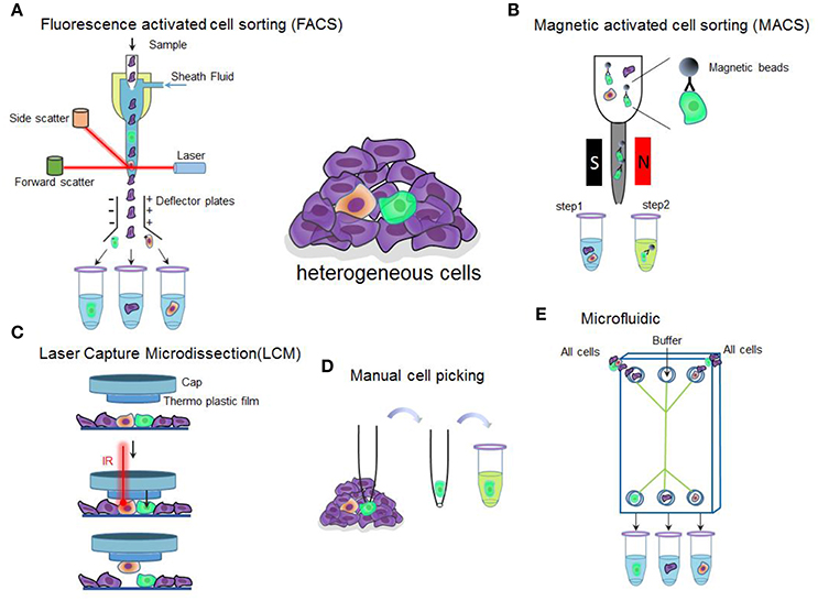 Frontiers | Single Cell Isolation and Analysis | Cell and