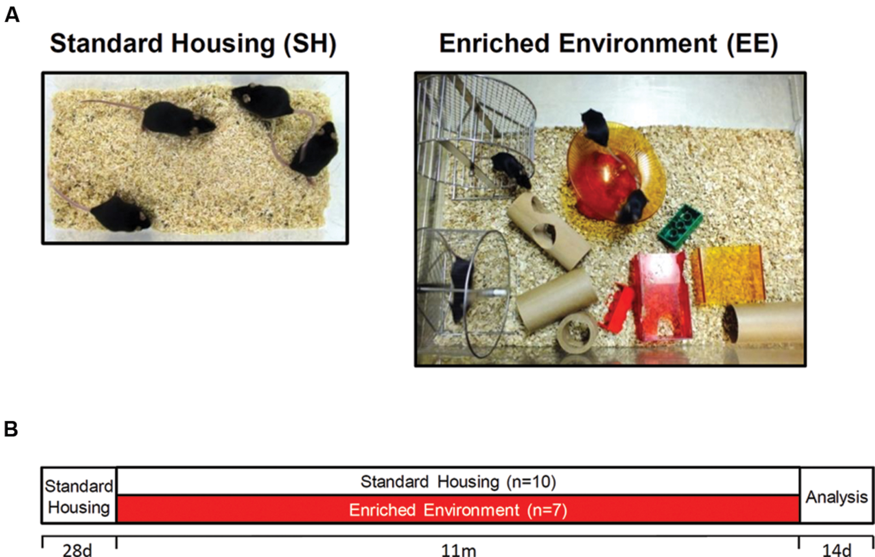 Environmental Enrichment May Help Treat >> Frontiers Effects Of Long Term Environmental Enrichment On Anxiety