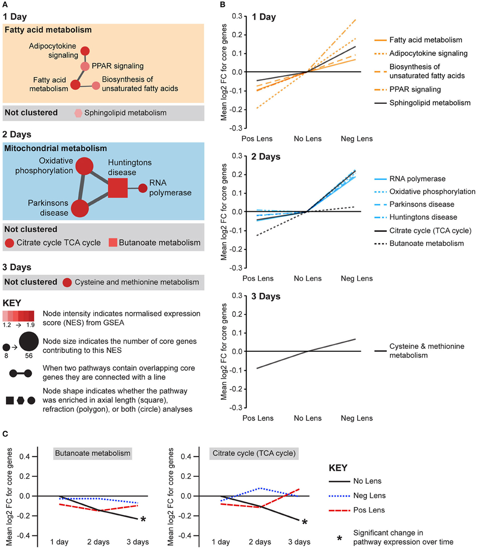 Pathways Over Time: Bidirectional Expression Of Metabolic