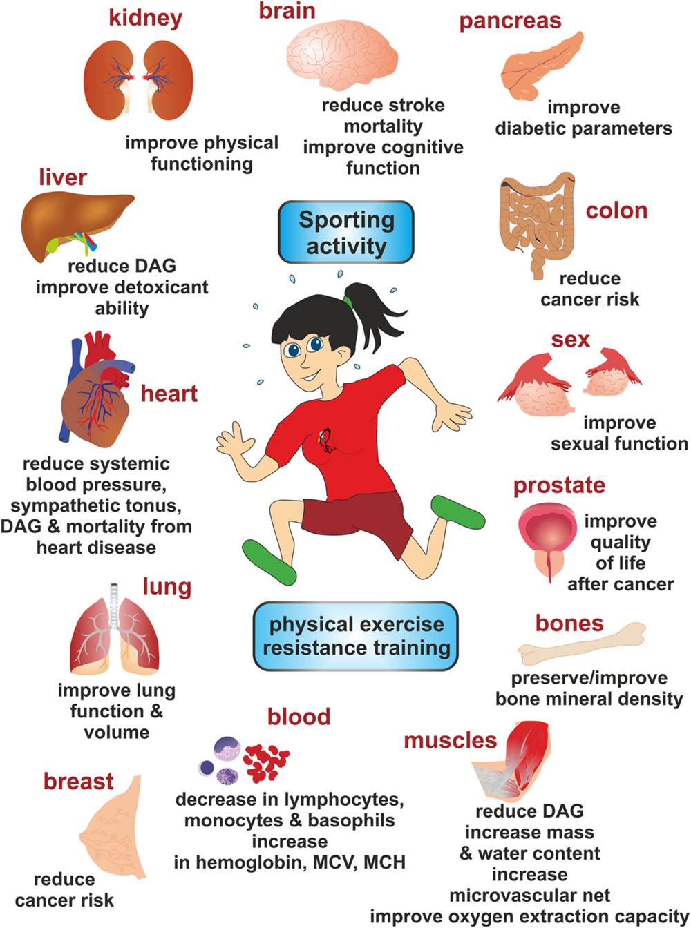 Frontiers | Exercise-Induced Release of Pharmacologically Active