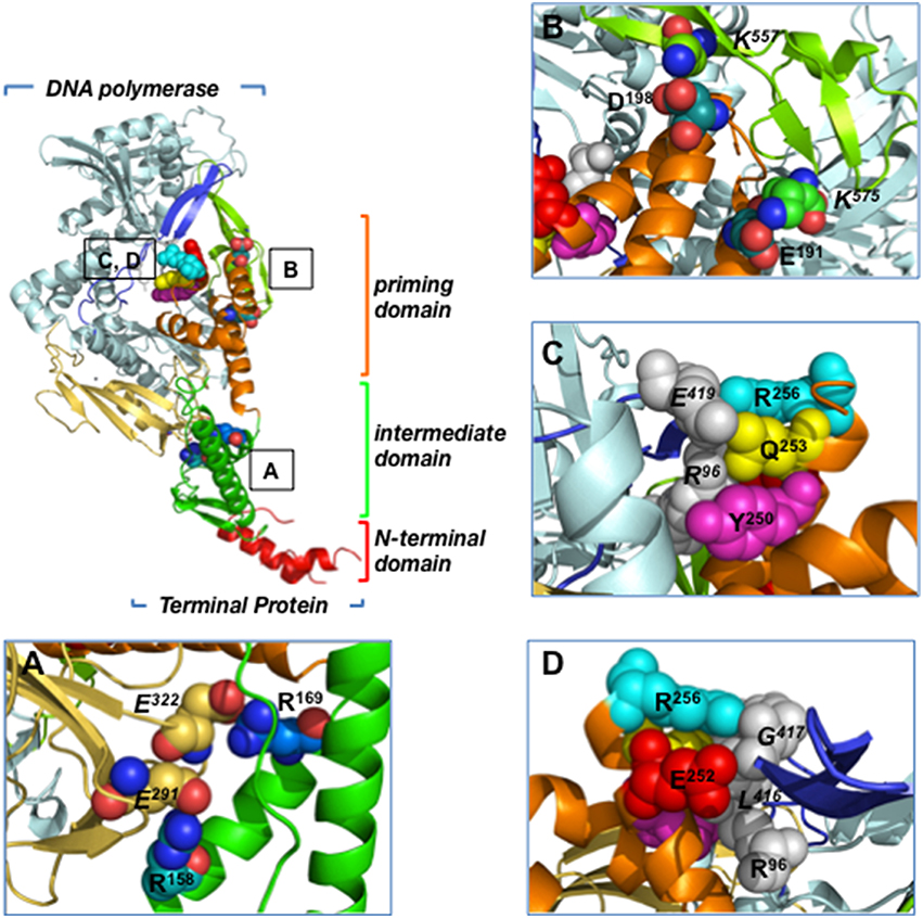 DNA-Binding Proteins Essential For Protein