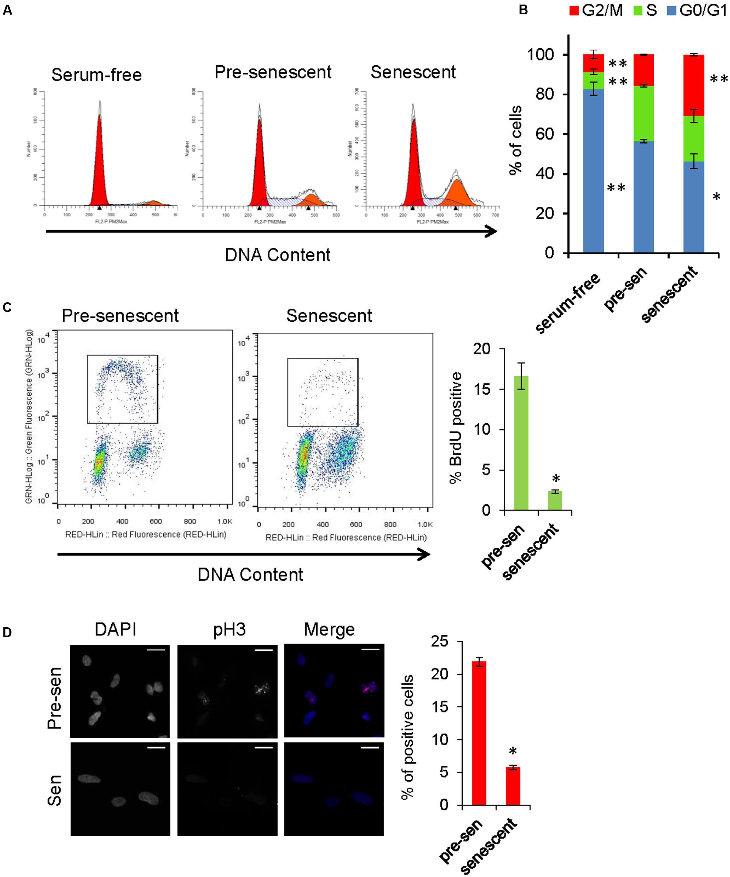 LNP023 blocks KRN-induced arthritis. Arthritis was induced