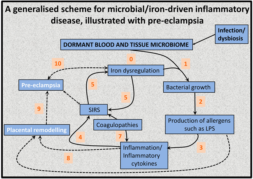 Frontiers | A Dormant Microbial Component in the Development